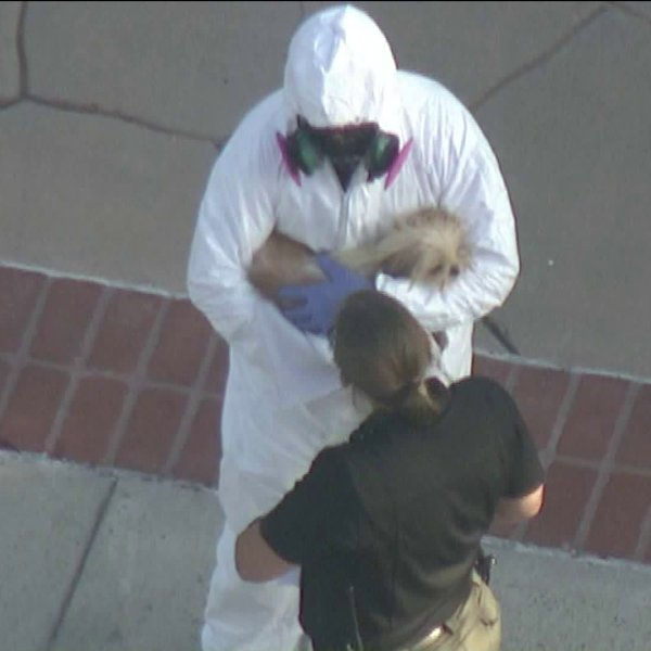 Officials donnedhazmat suits as they removed nearly 100 dogs from a home in the City of Orange on May 30, 2019. (Credit: KTLA)
