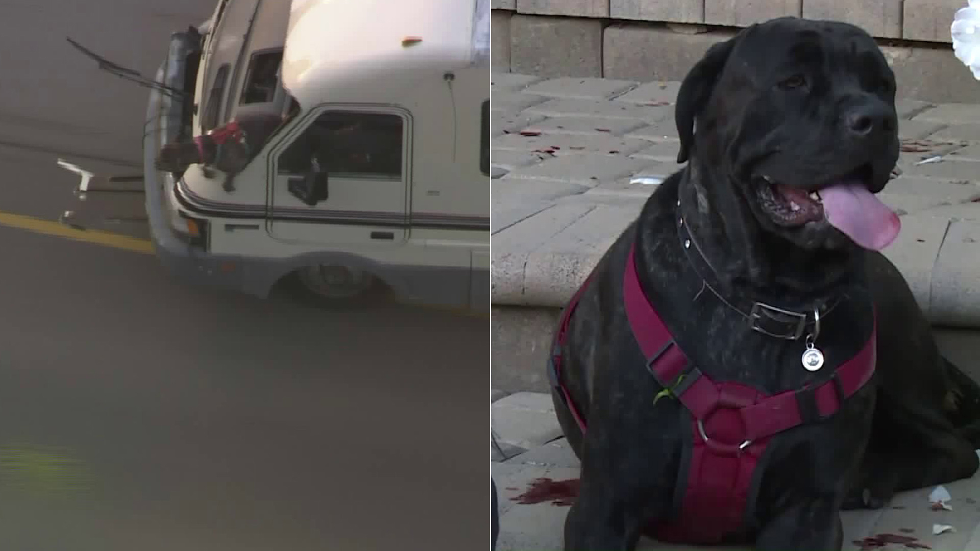 One of the dogs, left, jumped from a moving RV during the pursuit; the other was found with an injured and bloodied paw after the chase. (Credit: KTLA)