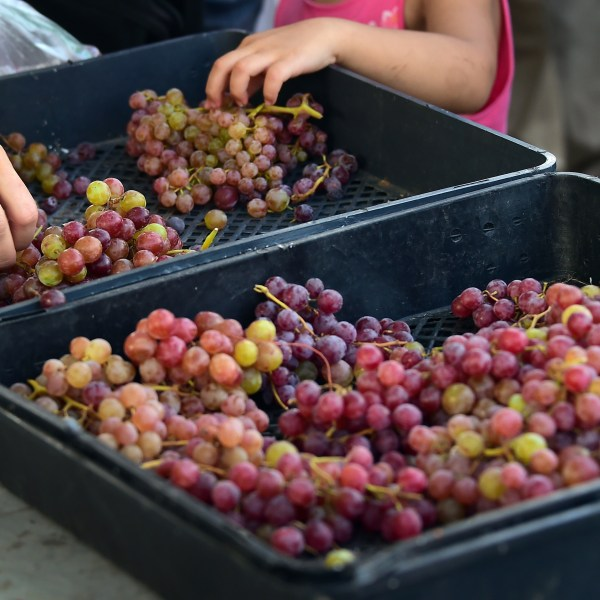 A mother and her daughter shop for grapes in Monterey Park on July 25, 2014. (Credit: FREDERIC J. BROWN/AFP/Getty Images)