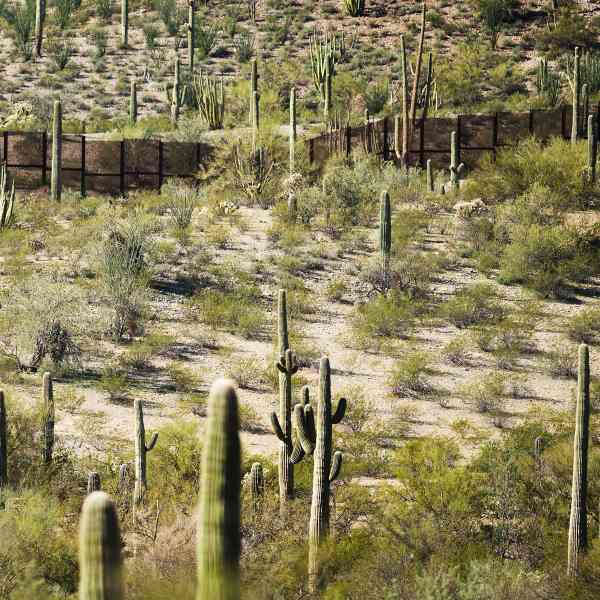 The fence at the U.S.-Mexico border is surrounded by cacti at Organ Pipe Cactus National Monument near Lukeville, Arizona, on Feb. 16, 2017. (Credit: Jim Watson / AFP / Getty Images)