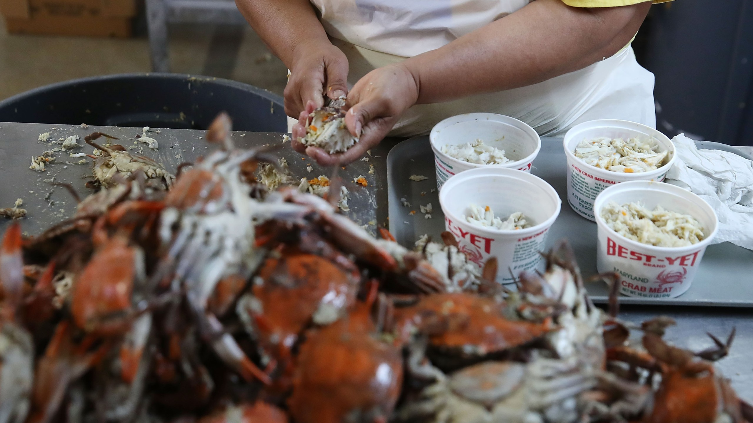A woman picks crabs at the W.T. Ruark Seafood Co. in Hoopers Island, Maryland, on May 17, 2018. Due to a new lottery system, several seafood companies failed to get temporary H-2B visas for their mostly Mexican workforce in 2018. (Credit: Mark Wilson / Getty Images)
