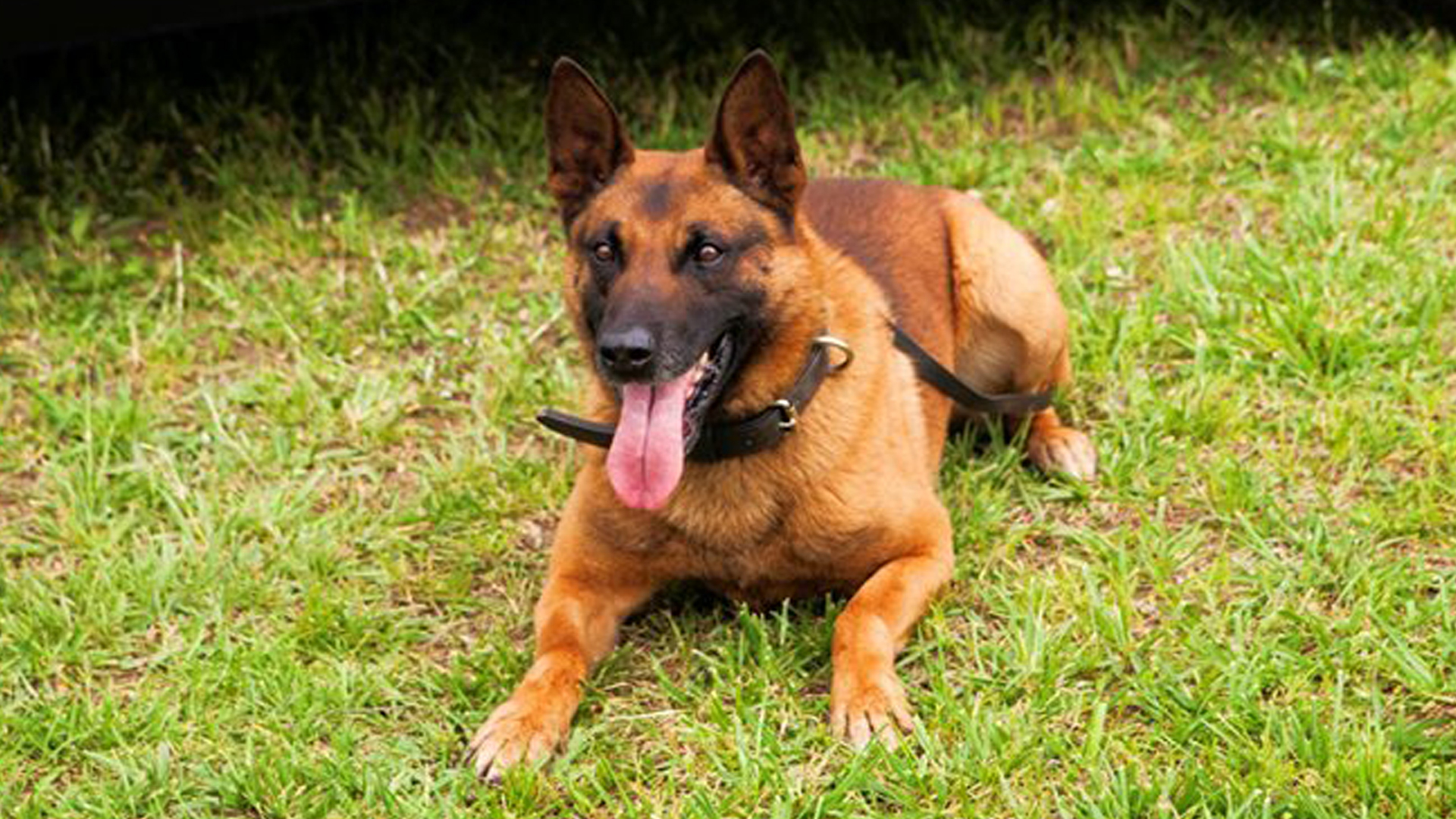 K9 Eli is seen in a photo released by the Gwinnett County Police Department.