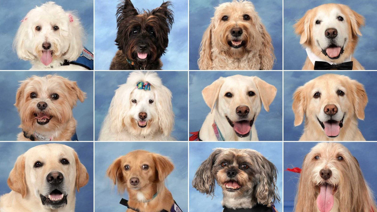 The 14 therapy dogs that have kept Marjory Stoneman Douglas High School students and staff company since last year's mass shooting are seen in school yearbook photos obtained by CNN.