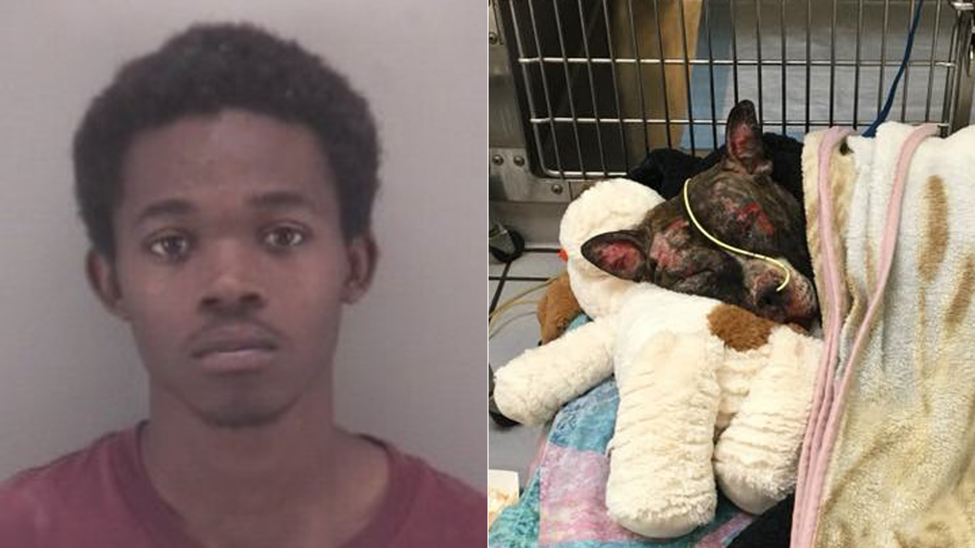 Arrest Made In Killing Of Dog Chained To Fence Doused
