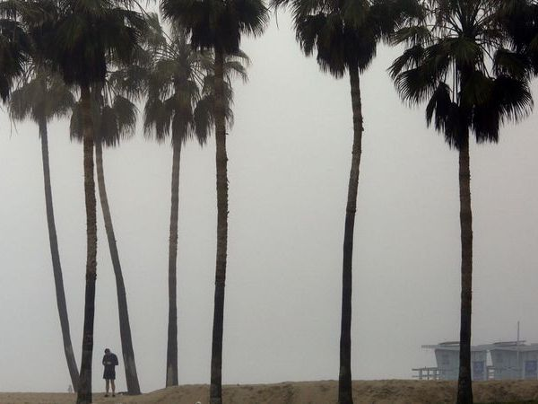 Trees are seen in Southern California in this undated photo. (Credit: Genaro Molina / Los Angeles Times)