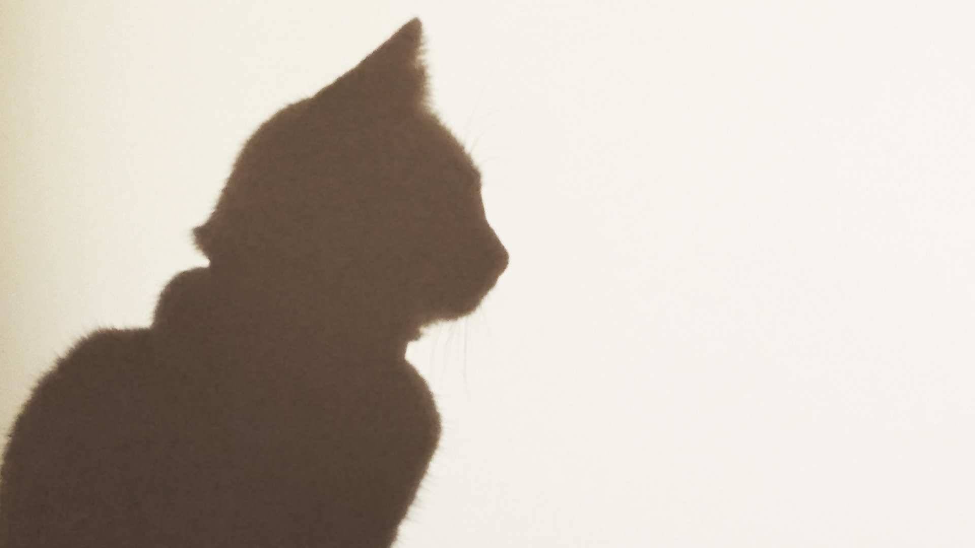 The blurry shadow of a cat silhouette is seen on a wall in this undated image. (Credit: Getty Images)
