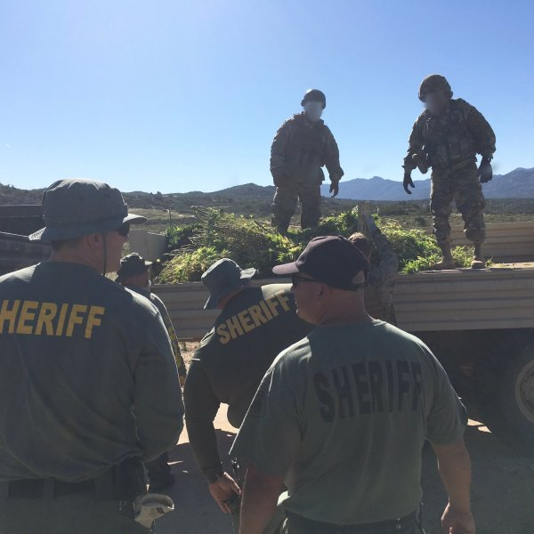Riverside County sheriff's deputies load confiscated marijuana plants onto a truck in the Anza area on June 5, 2019, in an image tweeted by the department.