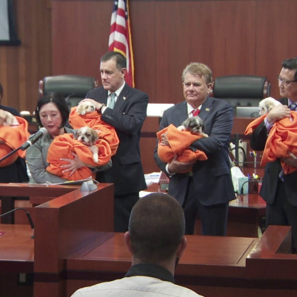 The Orange County Board of Supervisors on June 25, 2019 hold some of the puppies rescued from a home in Orange in May. (Credit: KTLA)