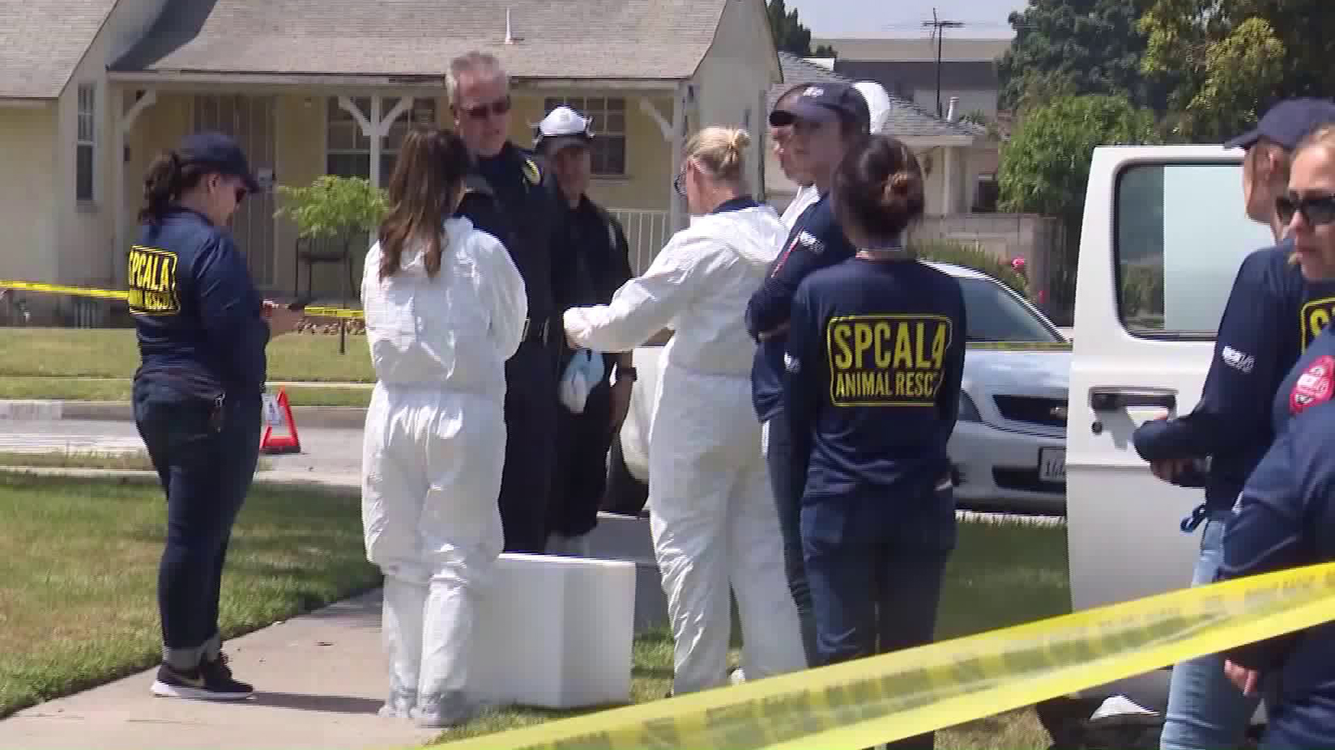 A team of investigators and animal rescue personnel responded to a residence in Downey on June 6, 2019. (Credit: KTLA)