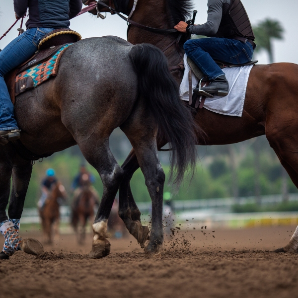 Race horses are seen during their morning workout at Santa Anita Park racetrack in Arcadia on June 15, 2019. (Credit: David McNew / Getty Images)