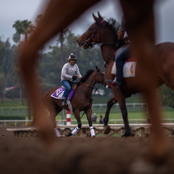 Race horses are seen during their morning workout at Santa Anita Park on June 15, 2019 in Arcadia. (Credit: David McNew/Getty Images)
