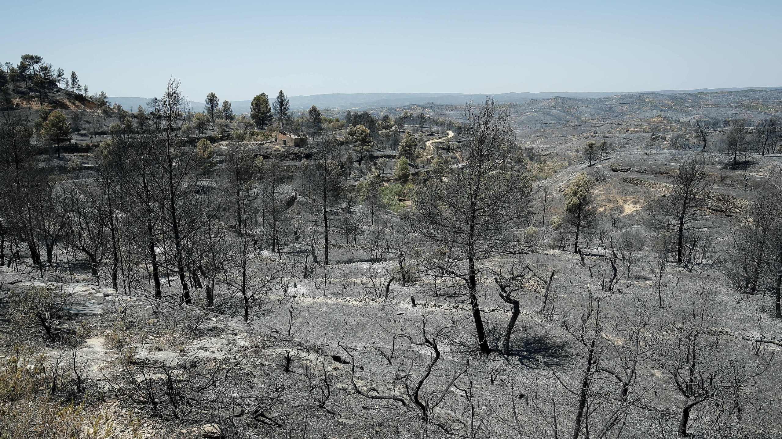 Burned trees are pictured near Flix on June 28, 2019 as a forest fire raged out of control in the northeastern region of Catalonia (Credit: PAU BARRENA/AFP/Getty Images)