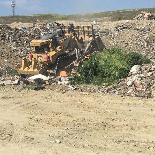 Nearly 70 tons of weed were buried at a landfill in Beaumont after a series of seizures at illegal grow operations in the Anza Valley on June 5, 2019. (Credit: Riverside County Department of Waste Resources)
