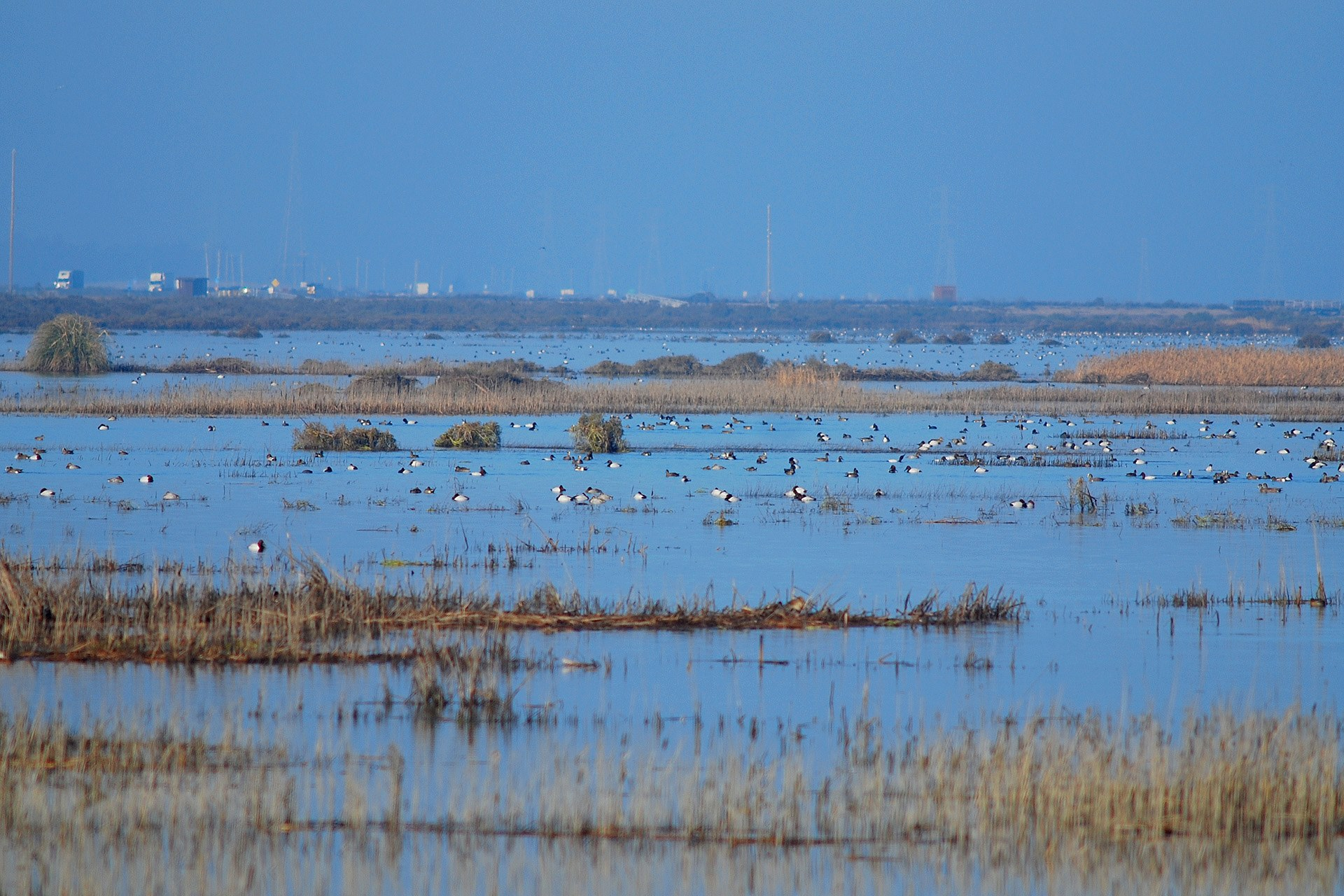 Ducks are seen at the Cullinan Ranch Unit in San Pablo Bay Refuge in a photo posted on the Facebook page for the San Francisco Bay NWR Complex in February 2015.