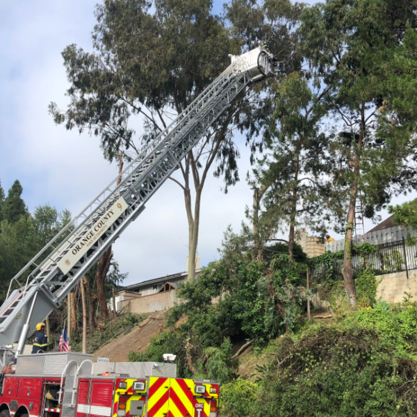 A rescue team works to bring a man down from a tree in Laguna Hills on June 4, 2019. (Credit: Orange County Fire Authority/ Twitter)