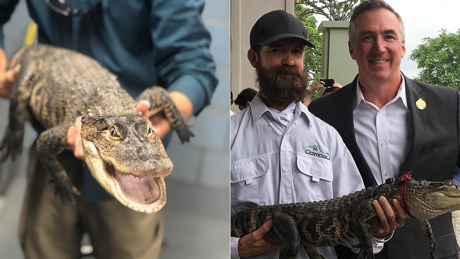 """""""Chance the Snapper"""" is shown in photos released by the City of Chicago on July 16, 2019."""