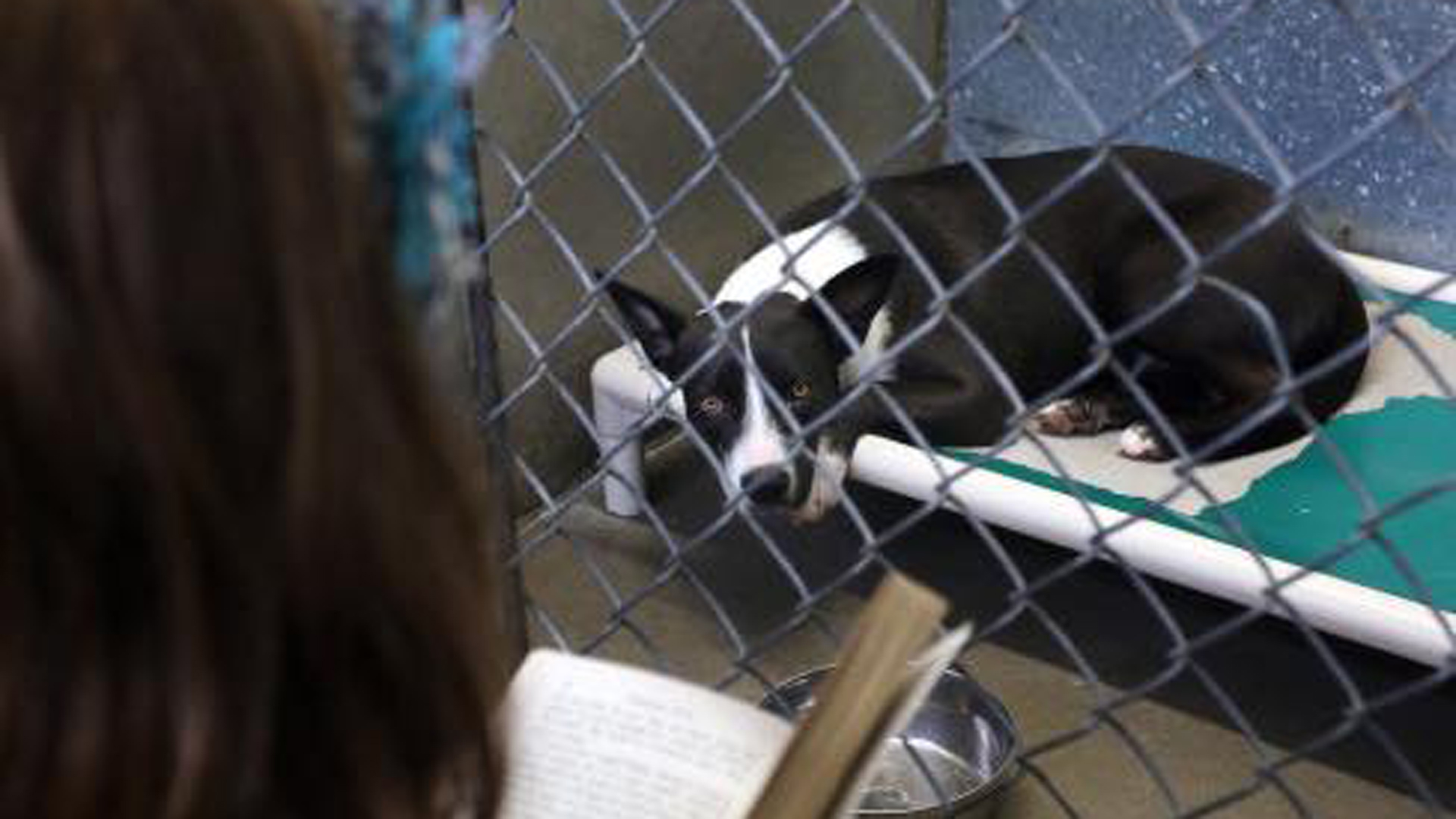 The Brevard County Sheriff's Office released a photo of dog in animal shelter on June 29, 2019.