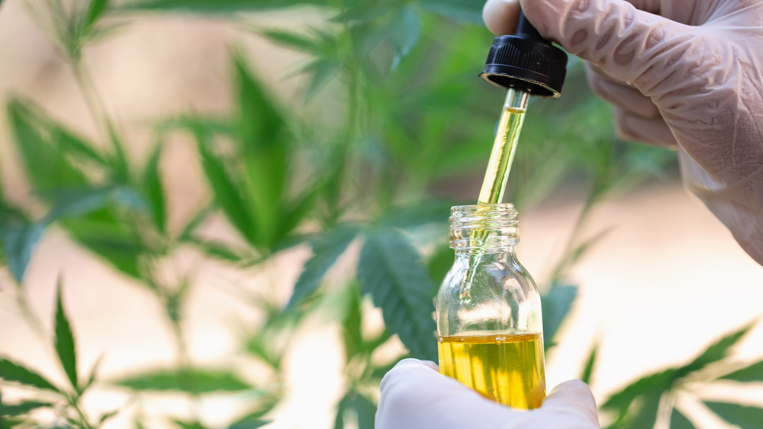This file photo shows cannabis oil. (Credit: Getty Images)