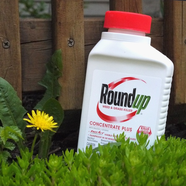 Roundup weed killer is shown in a photo illustration on May 14, 2019. (Credit: Scott Olson / Getty Images)