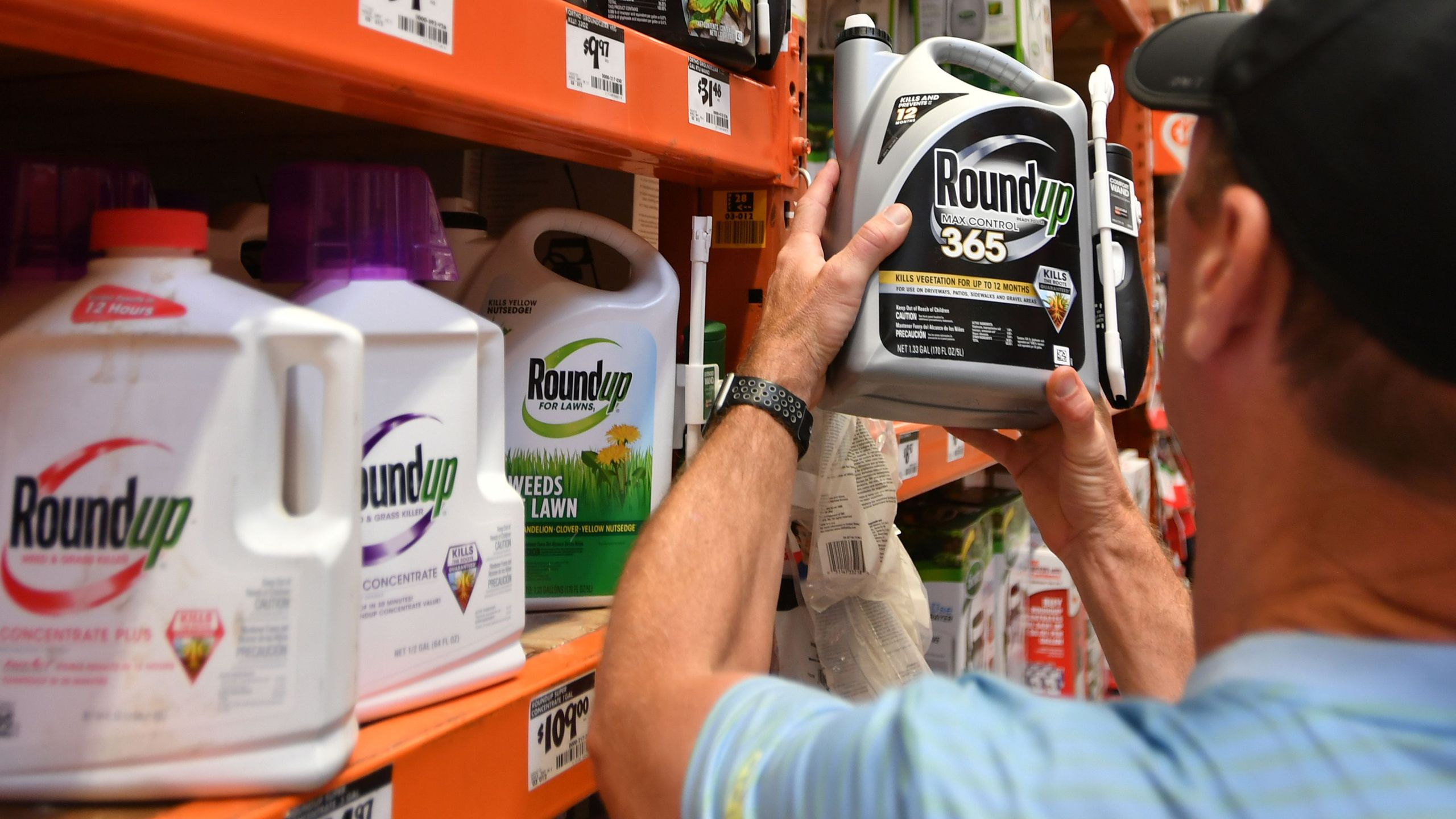 A customer shops for Roundup products at a store in San Rafael, California, on July, 9, 2018. (Credit: Josh Edelson/AFP/Getty Images)