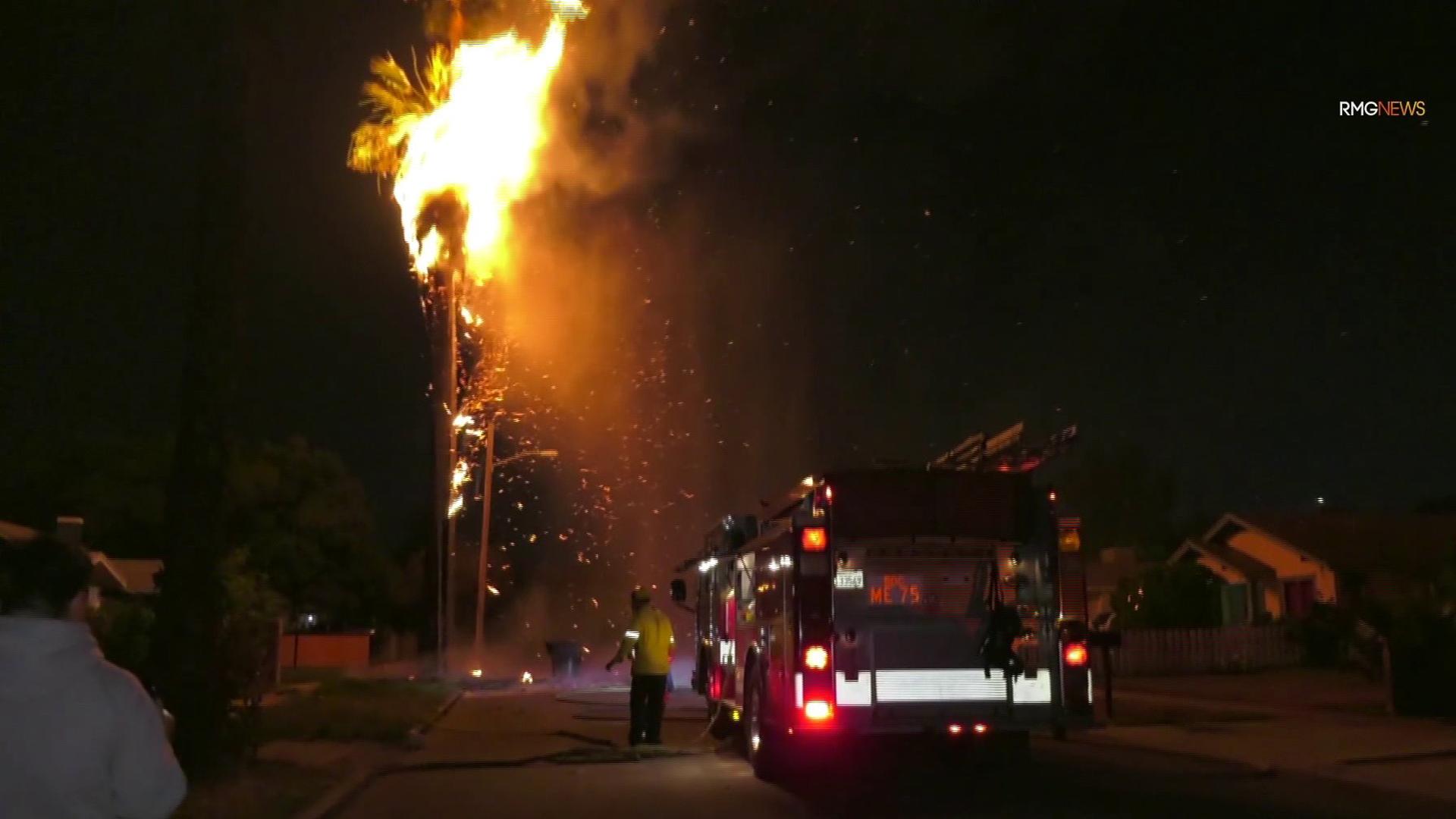 Fireworks ignited a palm tree fire in San Bernardino on July 4, 2019. (Credit: RMG News)