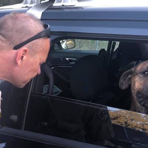 CHP released this photo of the rescued dog on Aug. 11, 2019.