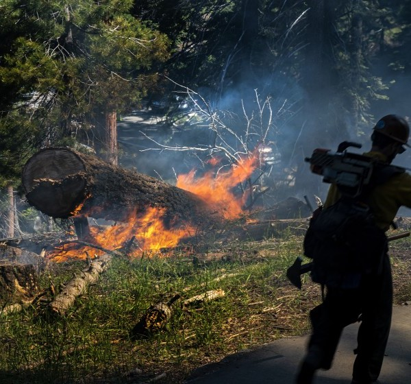 A firefighter carries his gear during a prescribed burn to get rid of dead trees and fallen brush in the Giant Forest in Sequoia National Park.(Credit: Gina Ferazzi/Los Angeles Times)
