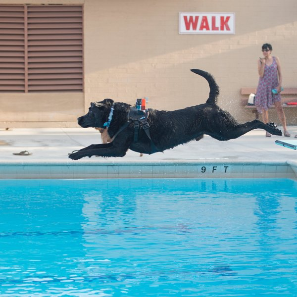 A dog takes a plunge into a public pool in this undated photo provided by Los Angeles County Parks and Recreation.