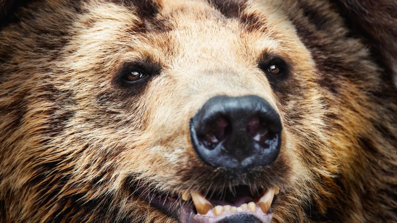 Bear Breaks Into Colorado Home, Smashes Through Wall in ...Kool Aid Man Breaking Through Wall Youtube
