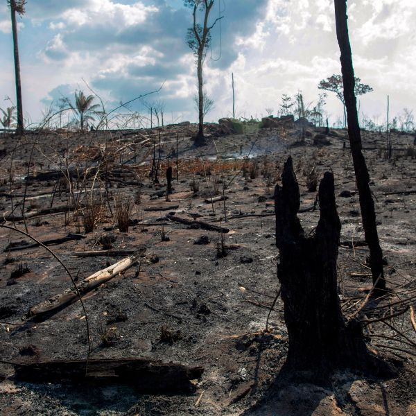 View of a burnt area after a fire in the Amazon rainforest near Novo Progresso, Para state, Brazil, on August 25, 2019. (Credit: JOAO LAET/AFP/Getty Images)