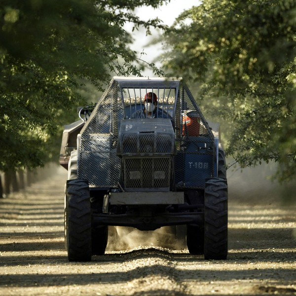 A tractor gathers rocks in a grove on August 11, 2004 near the town of Arvin, southeast of Bakersfield, California. (Credit: David McNew/Getty Images)