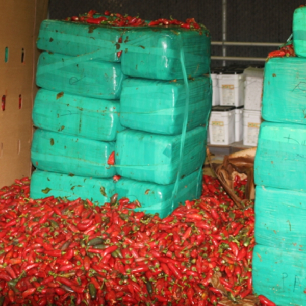 Customs and Border Protection released this image on Aug. 16, 2019 of packages of marijuana in a shipment of jalapeño peppers the agency reported seizing in Otay Mesa.