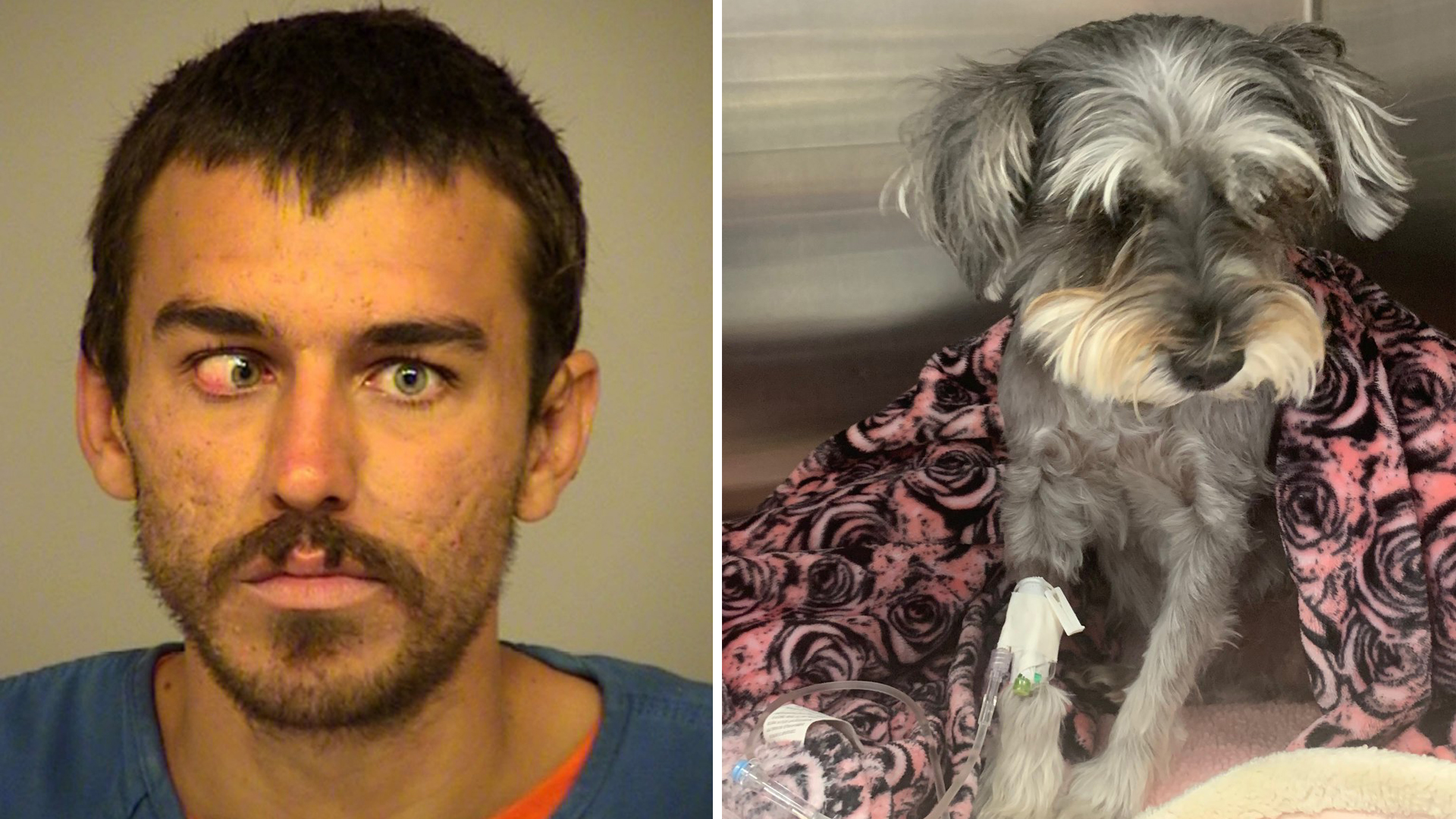 Dylan McTaggert and a dog named Sophie that he's suspected of kicking are seen in photos provided by the Port Hueneme Police Department on Aug. 12, 2019.