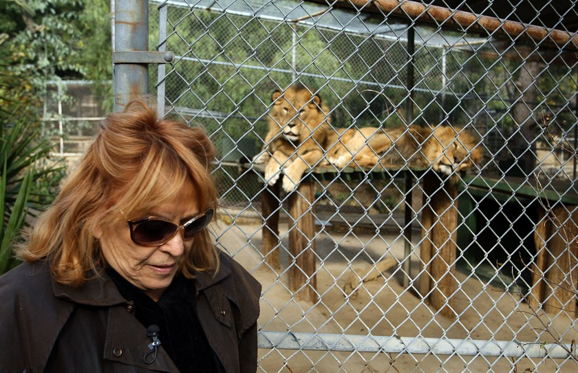 Martine Colette, who founded the Wildilfe Waystation, stands near African lions Leo Zaire, left, and Katunga at the facility in 2011. ( Credit: Gary Friedman/Los Angeles Times)