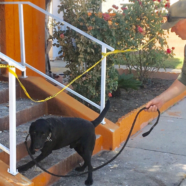 Sheriff's officials use an accelerant detection dog to search for clues at the scene of a church arson in Cudahy on Sept. 7, 2019. (Credit: Los Angeles County Sheriff's Department)