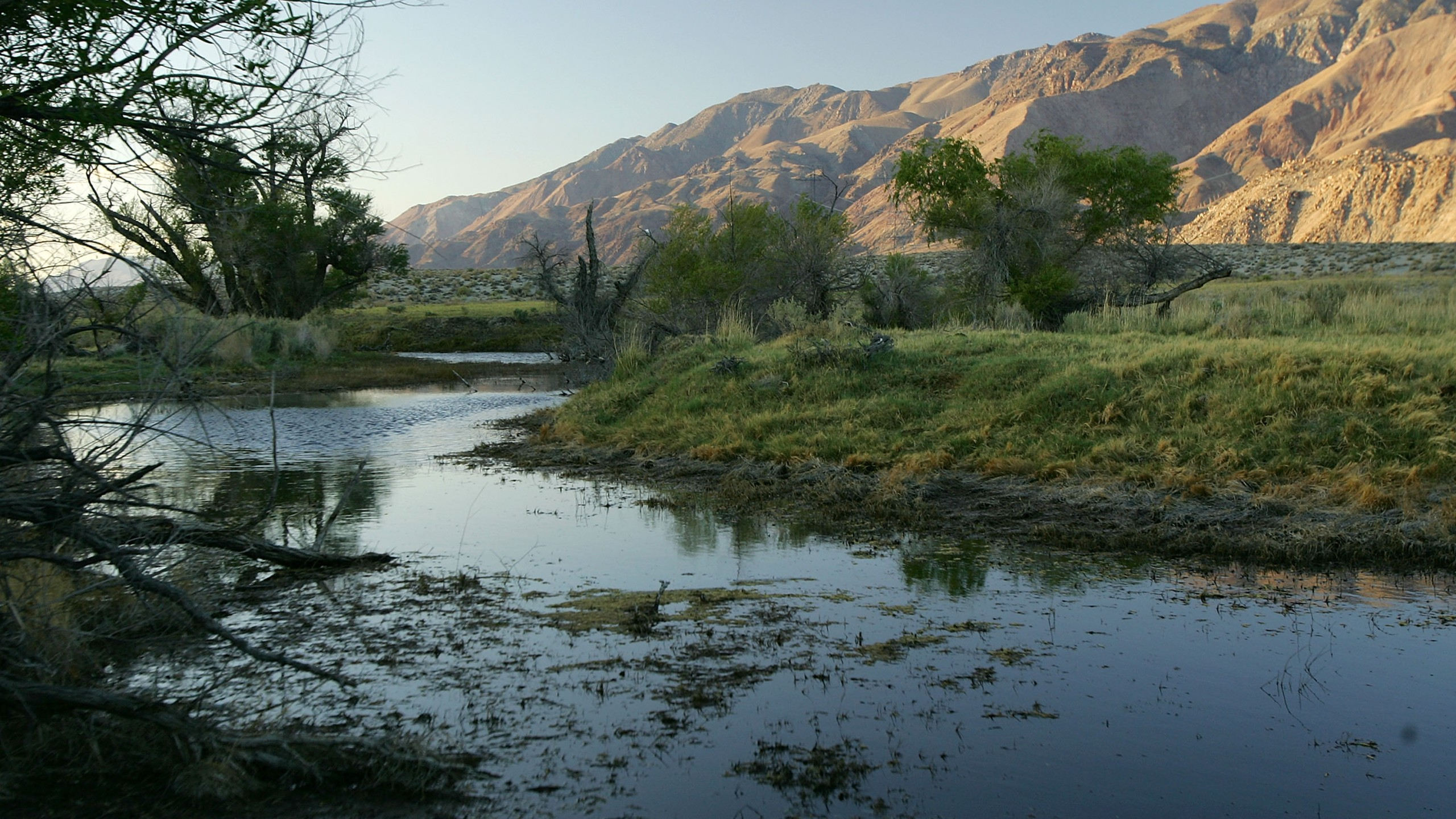 A habitat along the lower Owens River is seen on May 5, 2007, near Lone Pine, California. (Credit: David McNew/Getty Images)