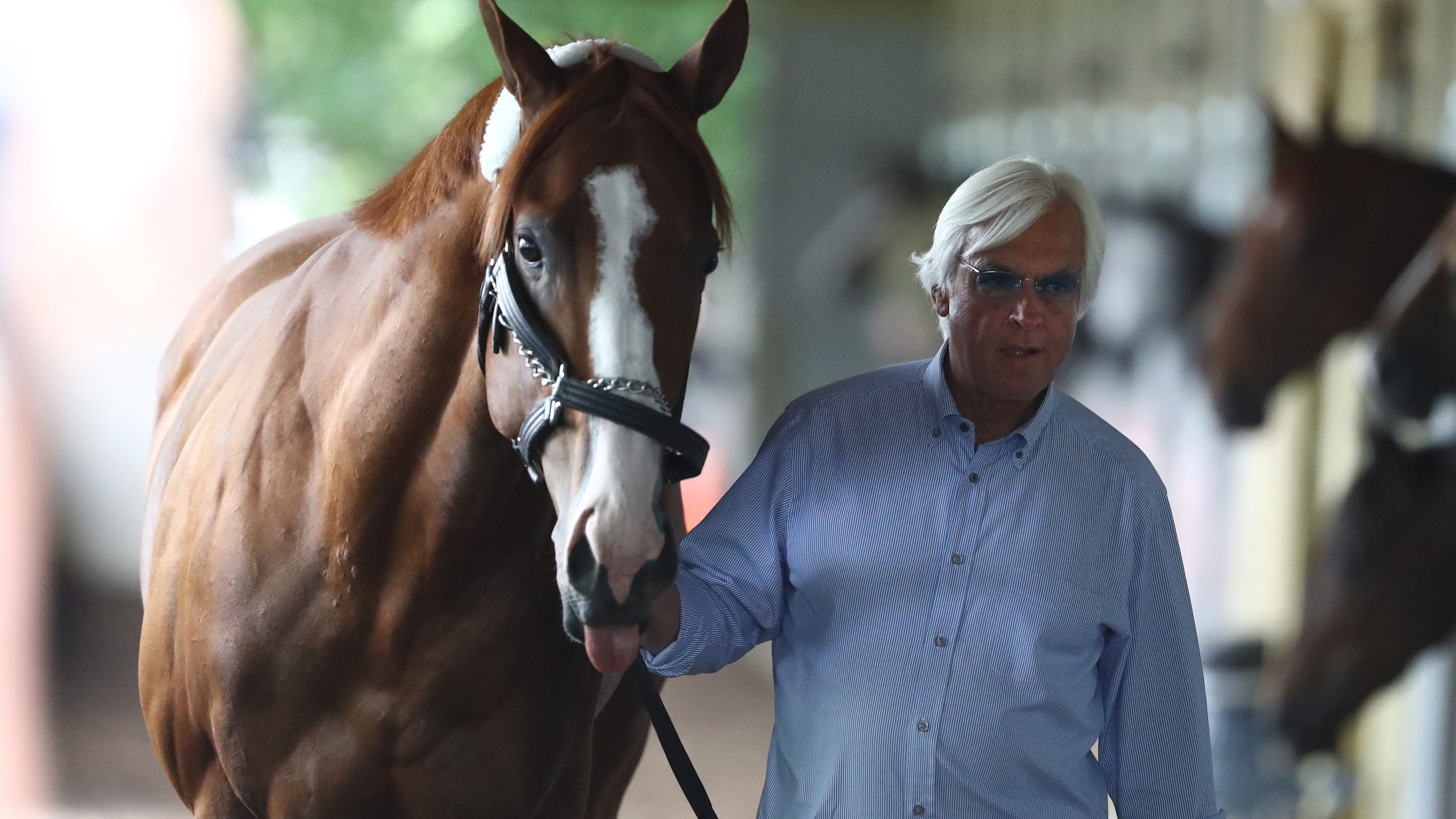 Justify is walked in his barn by trainer Bob Baffert after arriving prior to the 150th running of the Belmont Stakes at Belmont Park on June 6, 2018 in Elmont, New York. (Credit: Al Bello/Getty Images)