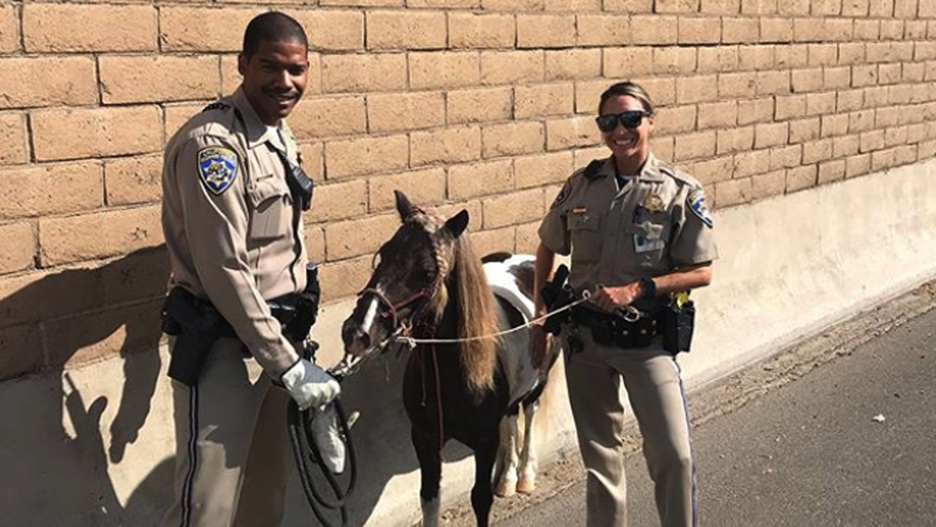 California Highway Patrol officer's wrangled an escaped pony along the 91 Freeway in Long Beach on Sept. 29, 2019. (Credit: CHP)