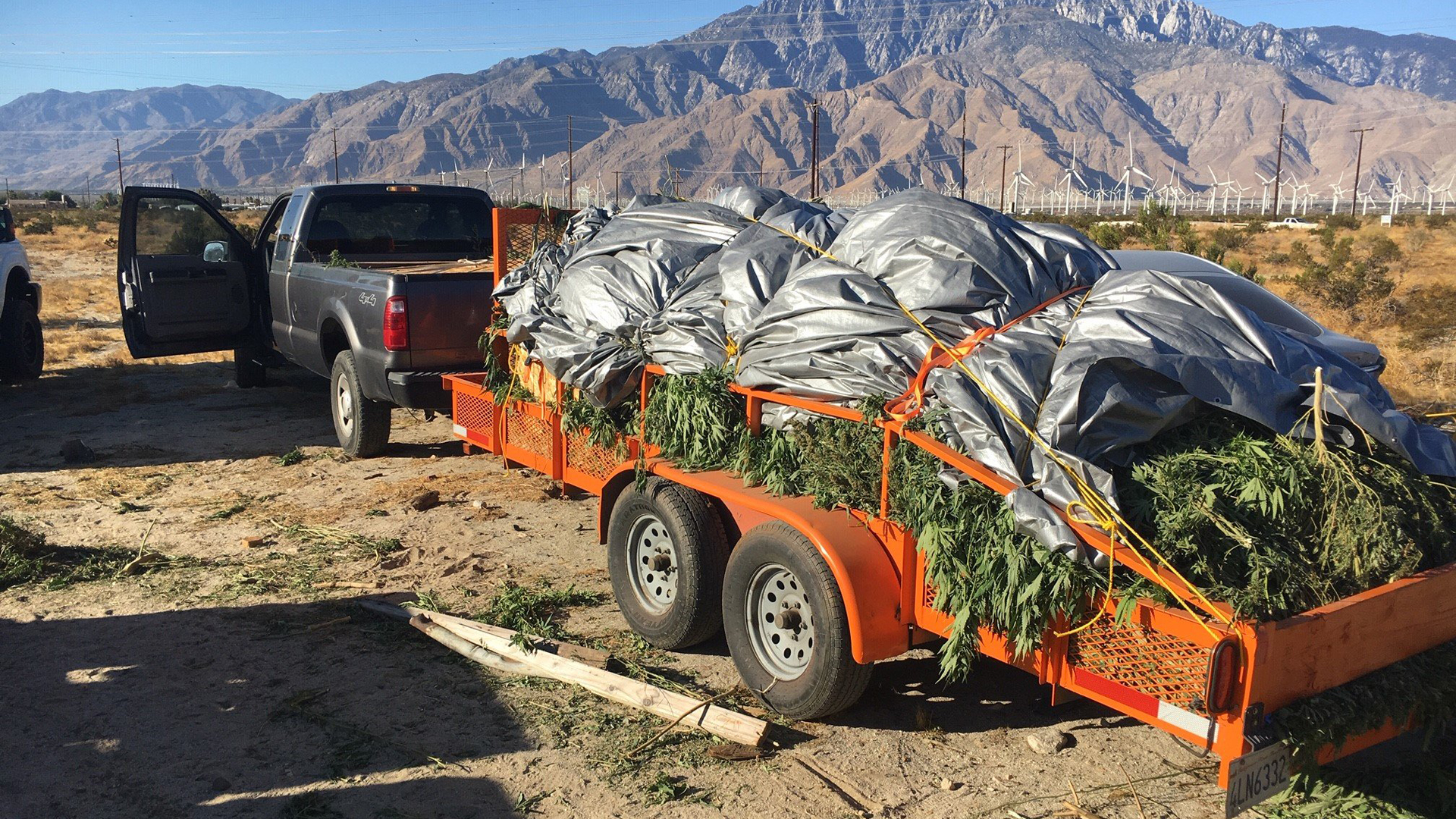 Investigators haul away about 1,200 marijuana plants after raiding an illegal grow site in North Palm Springs on Sept. 19, 2019. (Credit: Riverside County District Attorney's Office)