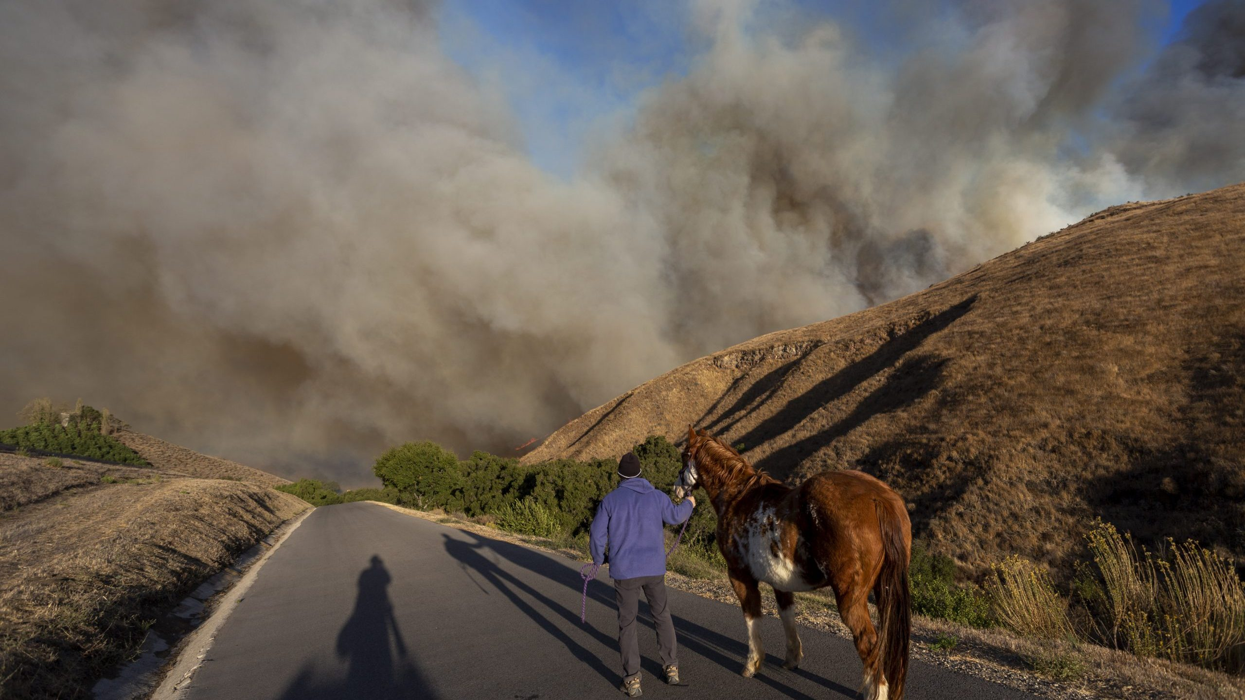 A man evacuates horses as the Easy Fire approaches on Oct. 30, 2019 near Simi Valley. (Credit: David McNew/Getty Images)