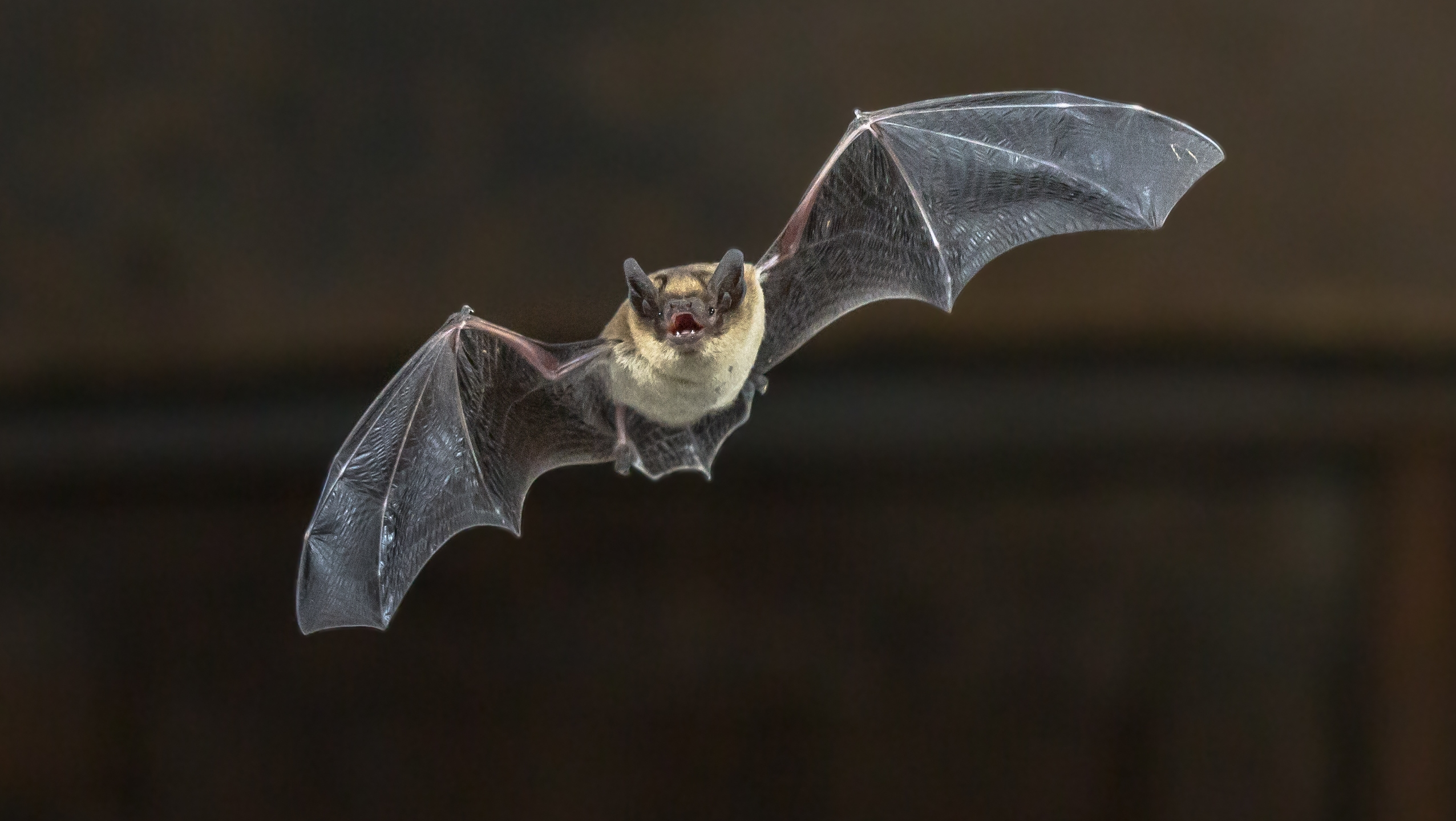 A bat is seen in an undated image. (Credit: iStock / Getty Images Plus)