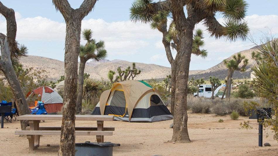 A camp ground at Joshua Tree appears in an undated photo posted on the National Park Service website.