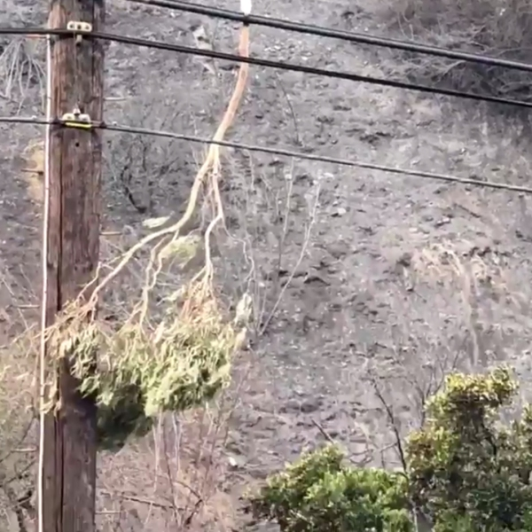 LAFD shared this image of a tree branch that fell on power lines and apparently sparked the Getty Fire on Oct. 28, 2019.