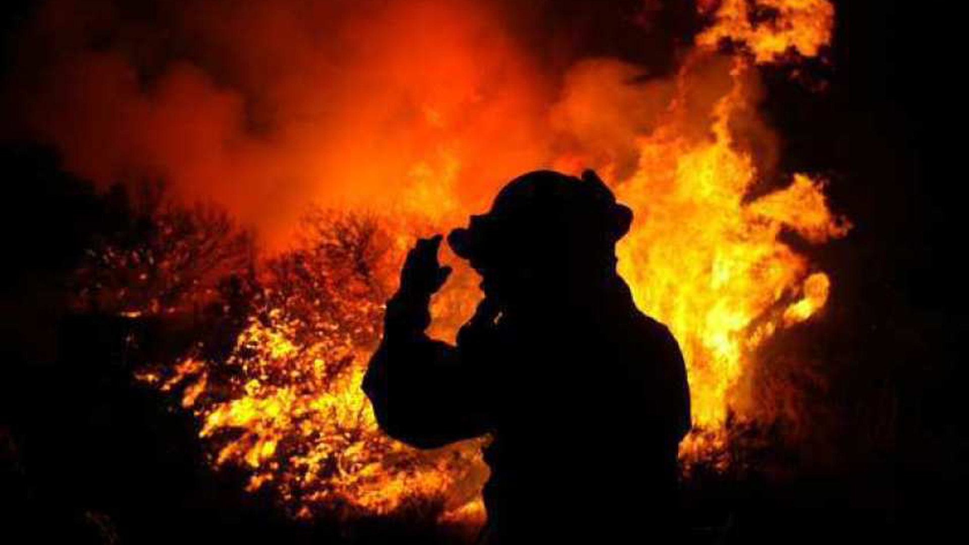 """A firefighter surveys a scene at the 2003 Cedar fire in San Diego County, a blaze that was a """"game changer"""" for mutual-aid firefighting in California.(Credit: Allen J. Schaben / Los Angeles Times)"""