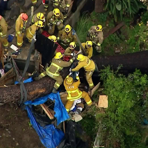 Firefighters rescued someone who was trapped under a tree that fell over in Echo Park on Dec. 23, 2019. (Credit: KTLA)