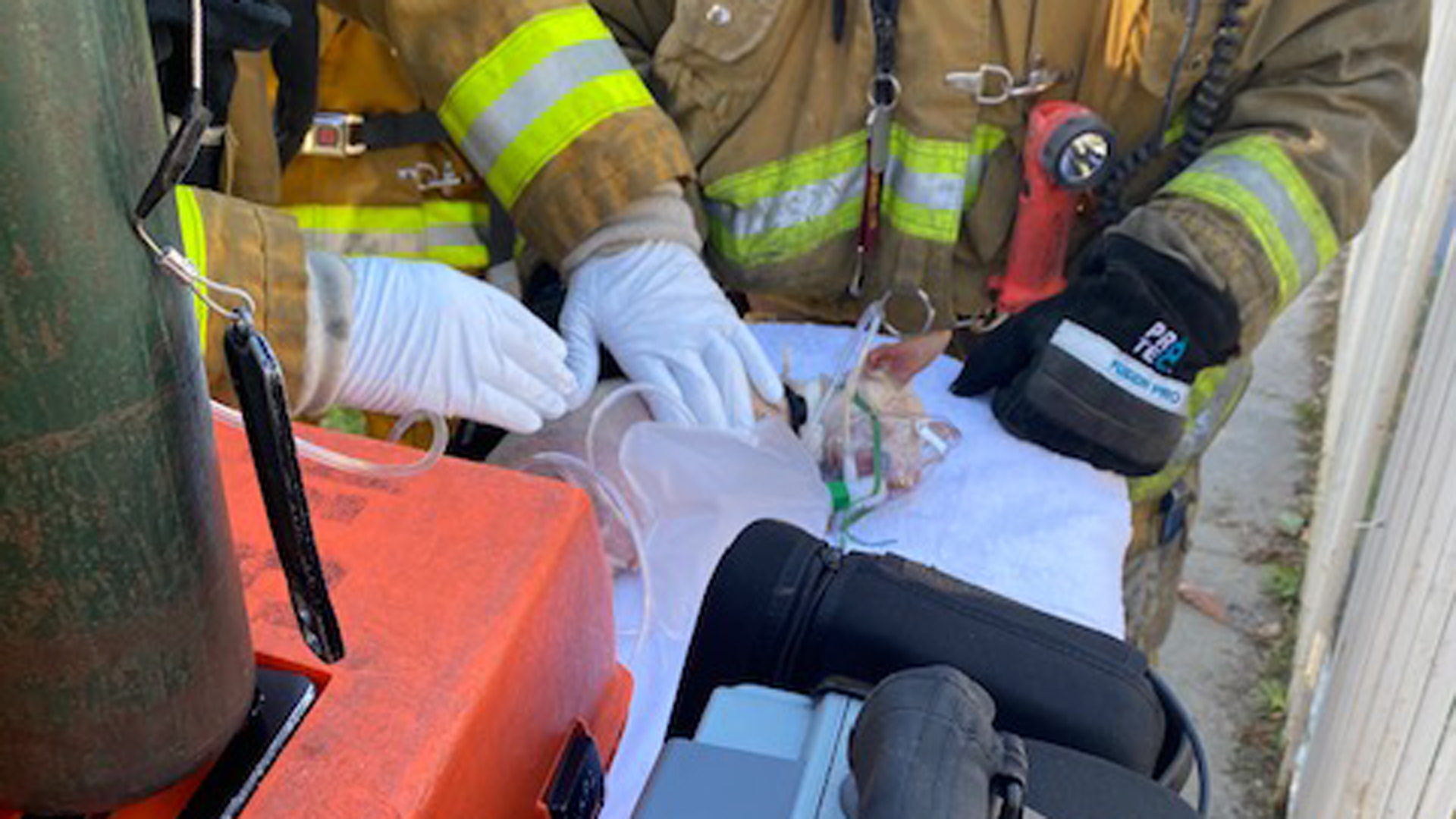 Firefighters performed life-saving measures on a dog pulled from a home that burned in Exposition Park on Dec. 16, 2019. (Credit: Ellsworth Fortman / Los Angeles Fire Department)