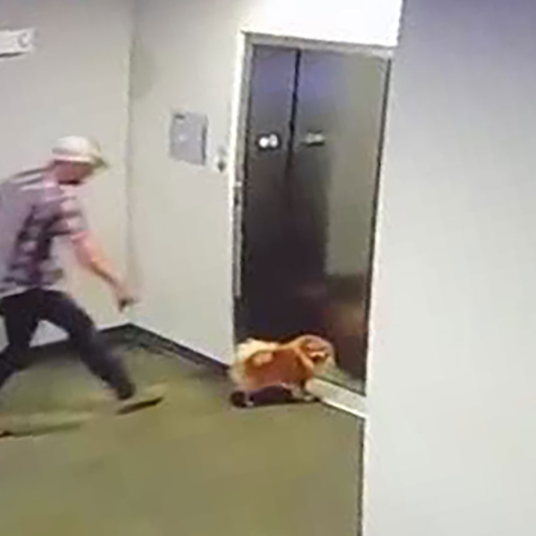 A man saved his neighbor's dog after its leash got caught in an elevator door on Monday and their apartment security cameras captured the rescue. (Credit: Johnny Mathis)