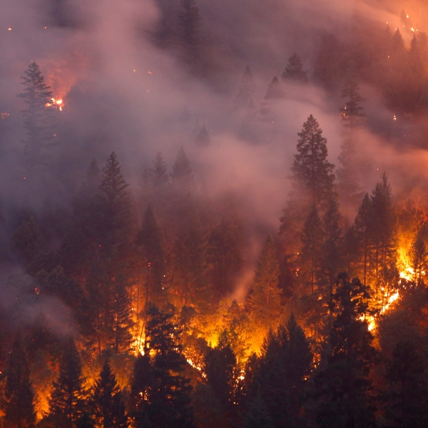 A forest burns west of Redding during the deadly Carr Fire on July 30, 2018. (Credit: Terray Sylvester / Getty Images)