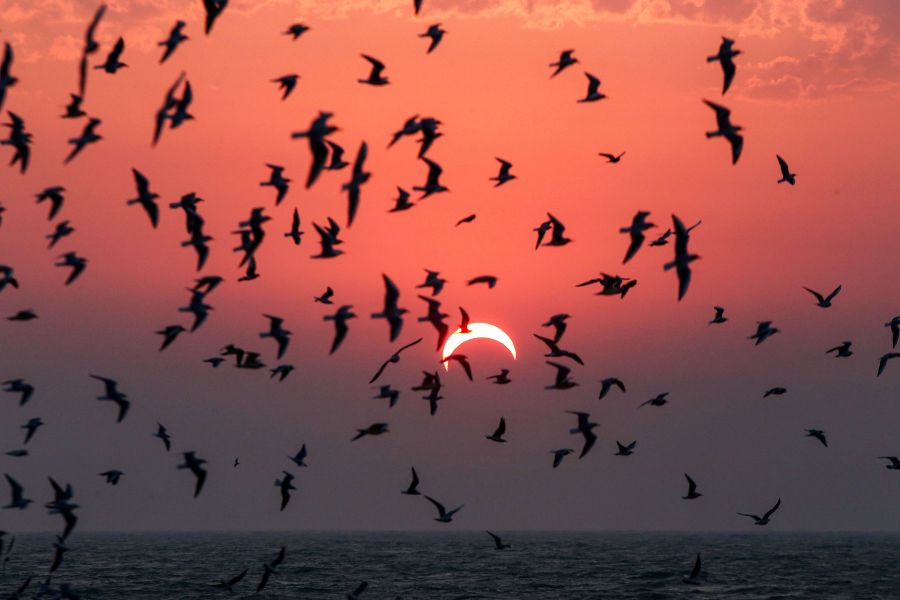 This picture taken early on Dec 26, 2019 shows seagulls flying above a beach in Kuwait City during the partial solar eclipse event. (Credit: YASSER AL-ZAYYAT/AFP via Getty Images)