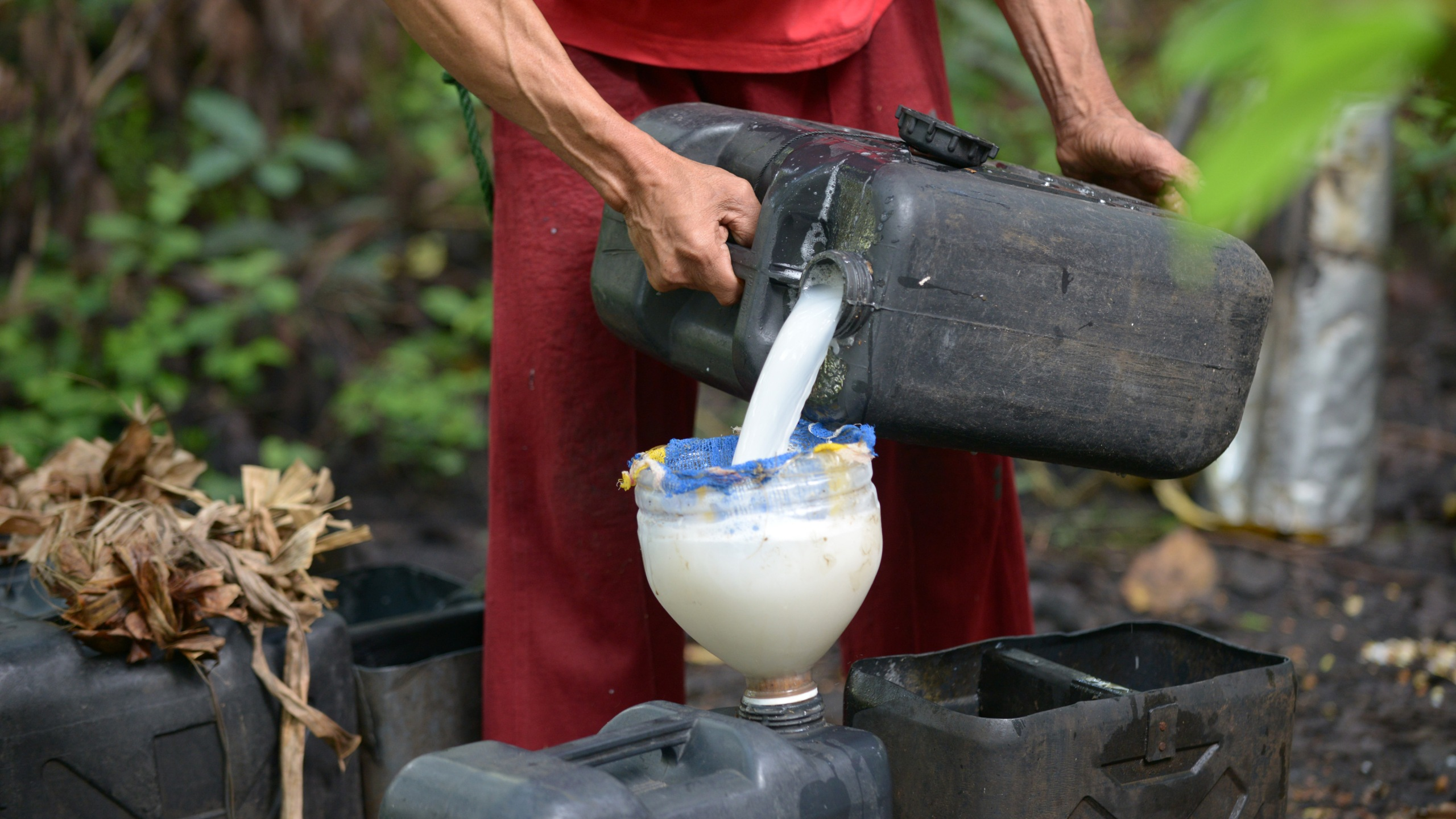 "In this photo taken on November 15, 2012, a man pours his harvest of coconut sap to be used in a local wine called ""tuba,"" the raw material for Lambanog, in Tayabas, Quezon Province, south of Manila, in the Philippines. (Credit: JAY DIRECTO/AFP via Getty Images)"
